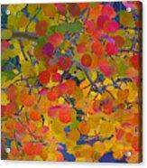 Colorful Aspen Acrylic Print