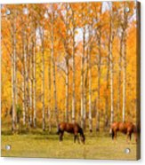 Colorful Autumn High Country Landscape Acrylic Print