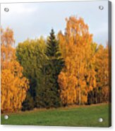 Colorful Autumn - Trees In Autumn Acrylic Print
