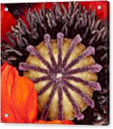 Colorful Bloom Acrylic Print