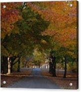 Colorful Byway Acrylic Print