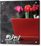 Colorful Cactus In Terracotta Pot Acrylic Print