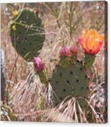 Colorful Cactus Acrylic Print