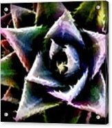 Colorful Cactus Acrylic Print