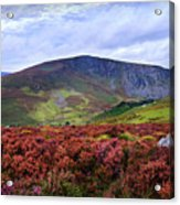 Colorful Carpet Of Wicklow Hills Acrylic Print