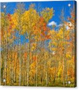 Colorful Colorado Autumn Landscape Acrylic Print