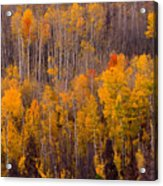 Colorful Colorado Autumn Landscape Vertical Image Acrylic Print