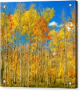 Colorful Colorado Fall Foliage Acrylic Print