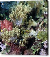 Colorful Coral Reef Acrylic Print