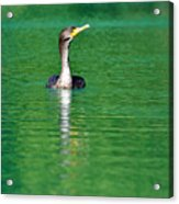 Colorful Cormorant Acrylic Print