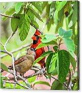 Colorful Couple Acrylic Print