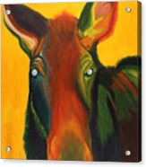 Colorful Cow Acrylic Print by Amy Reisland-Speer