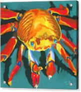 Colorful Crab II Acrylic Print by Stephen Anderson