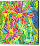 Colorful Daisies Acrylic Print