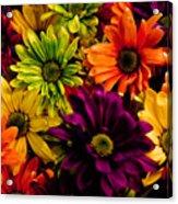 Colorful Daisies Acrylic Print