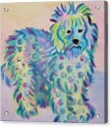 Colorful Dog Acrylic Print