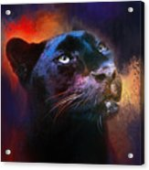 Colorful Expressions Black Leopard Acrylic Print