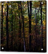 Colorful Fall Season Acrylic Print