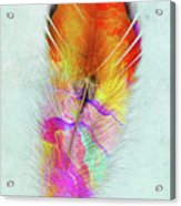 Colorful Feather Art Acrylic Print