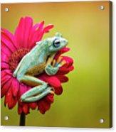 Colorful Frog Acrylic Print