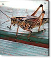 Colorful Grasshopper Acrylic Print