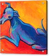 Colorful Greyhound Whippet Dog Painting Acrylic Print by Svetlana Novikova