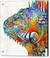 Colorful Iguana Art - One Cool Dude - Sharon Cummings Acrylic Print