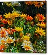 Colorful In The Garden  Acrylic Print