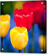 Colorful L569 Acrylic Print