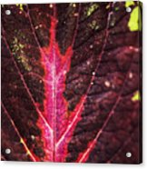 Colorful Leaf By Mother Nature Acrylic Print