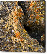 Colorful Lichens Acrylic Print