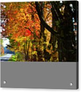Colorful Maples Acrylic Print