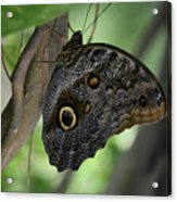 Colorful Markings On A Blue Morpho Butterfly On A Tree Trunk Acrylic Print