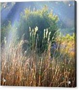 Colorful Morning Marsh Acrylic Print