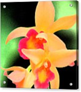 Colorful Orchid Acrylic Print