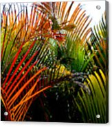 Colorful Palm Leaves Acrylic Print