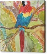 Colorful Parrot Acrylic Print