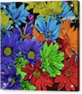 Colorful Petals Acrylic Print
