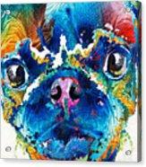 Colorful Pug Art - Smug Pug - By Sharon Cummings Acrylic Print