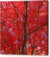 Colorful Red Orange Fall Tree Leaves Art Prints Autumn Acrylic Print