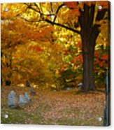 Colorful Rest Acrylic Print