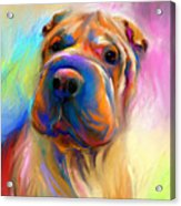 Colorful Shar Pei Dog Portrait Painting  Acrylic Print by Svetlana Novikova