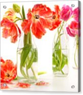 Colorful Spring Tulips In Old Milk Bottles Acrylic Print
