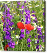 Colorful Spring Wild Flowers Acrylic Print