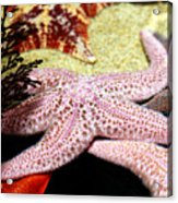 Colorful Starfish Acrylic Print