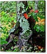 Colorful Stump Acrylic Print