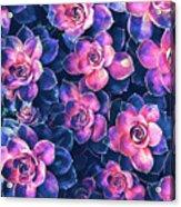 Colorful Succulent Plants Acrylic Print