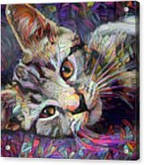 Colorful Tabby Kitten Acrylic Print