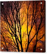 Colorful Tree Silhouettes Acrylic Print