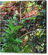 Colorful Tropical Plants Acrylic Print